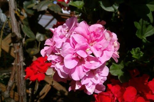 Photos gratuites de jardin