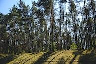 wood, nature, summer