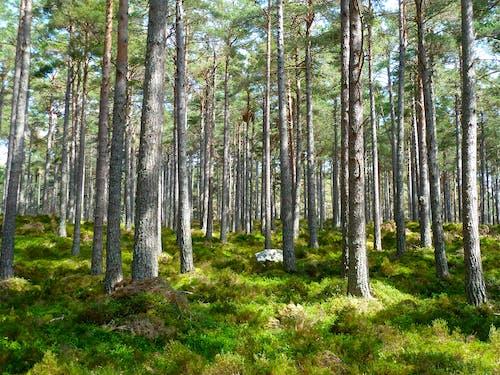 白天在绿色草地上的绿树