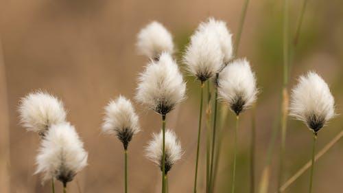 Безкоштовне стокове фото на тему «делікатний, завод, зростання, квіти»
