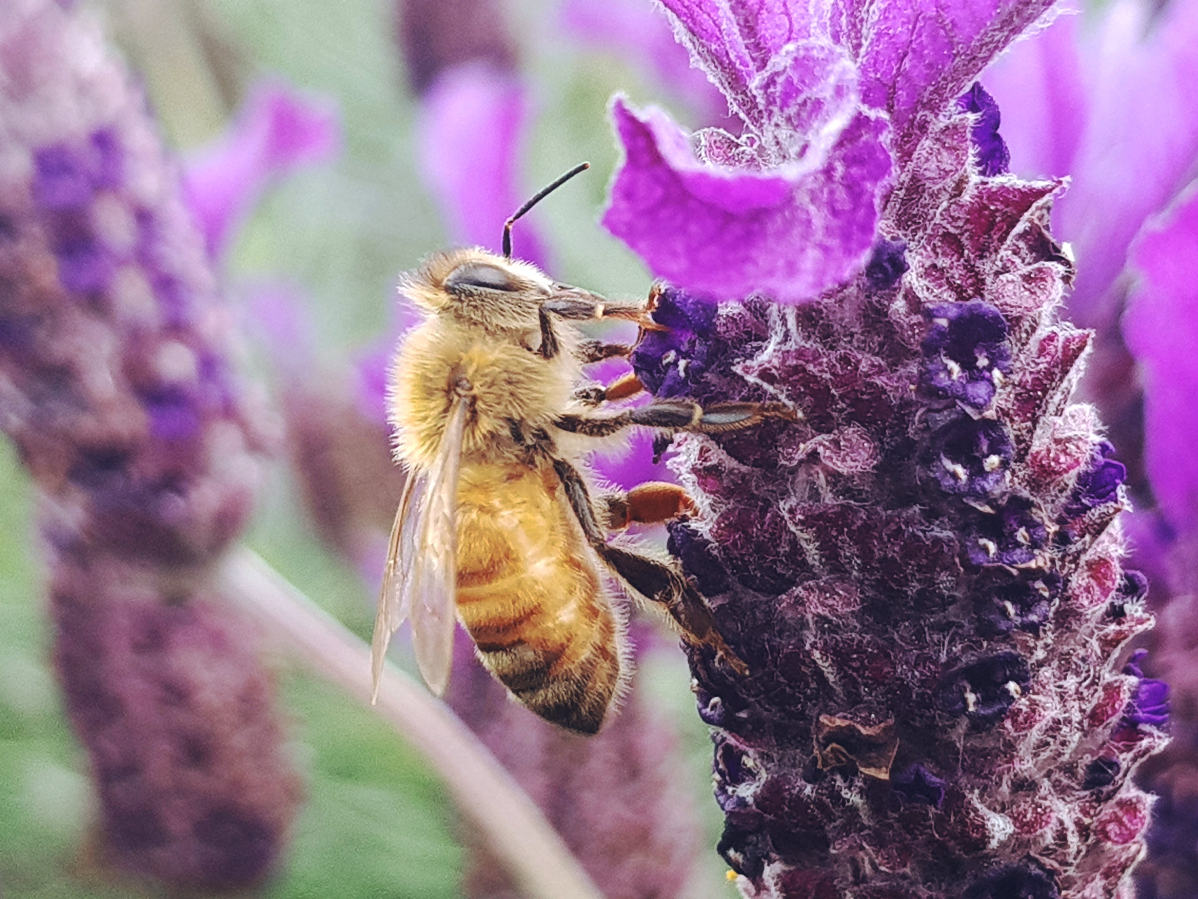 Bee Perched on Top of Purple Petaled Flower