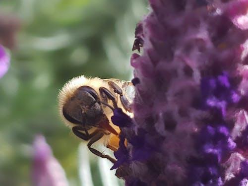 Foto profissional grátis de abelha, abelhas, alimentação de abelha, beber de abelha
