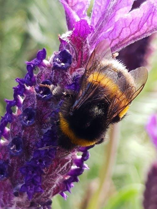 Foto profissional grátis de abelha, abelhões, alimentação de abelha, beber de abelha