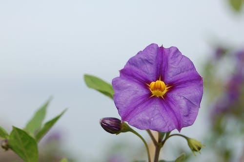 Δωρεάν στοκ φωτογραφιών με λουλούδι, όμορφα λουλούδια