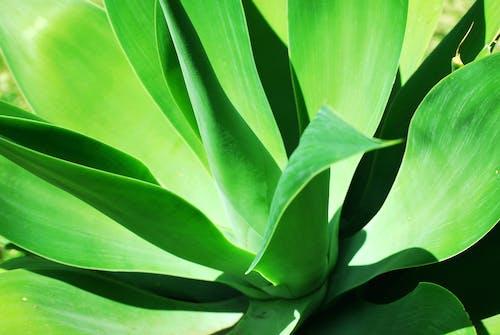 녹색, 식물, 여름, 화창한의 무료 스톡 사진