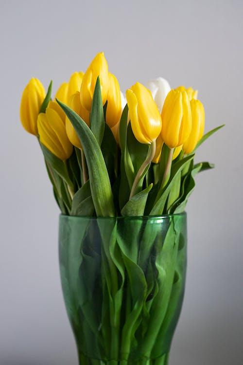 Gratis stockfoto met afzonderlijk, blad, bloeiende bloem