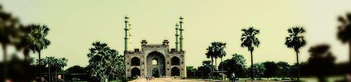 Hindistan cevizi, Hindistan cevizi ağacı, Hindistan cevizi ağaçları, mezar içeren Ücretsiz stok fotoğraf