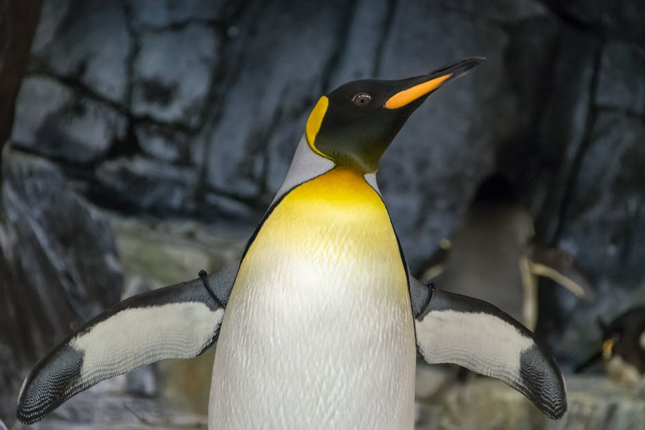 Emperor Penguin With Wings Sapread