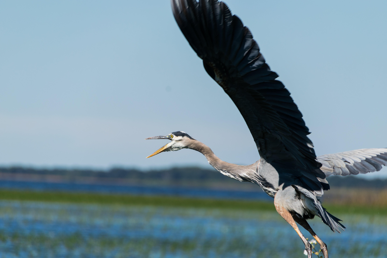 hayvan, kanatlar, tüyler, uçan içeren Ücretsiz stok fotoğraf