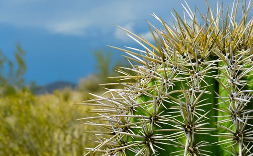 Ingyenes stockfotó éles, gyár, hegyes, kaktusz témában