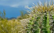 nature, desert, plant