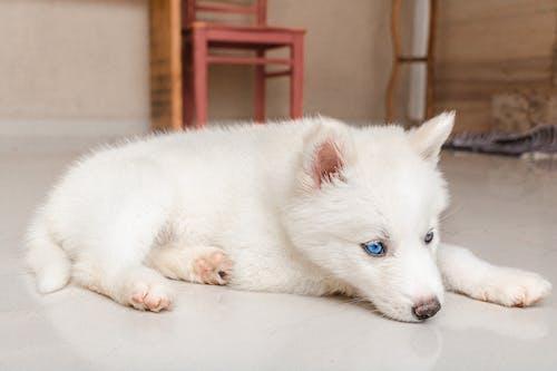 Fotos de stock gratuitas de acostado, adorable, animal