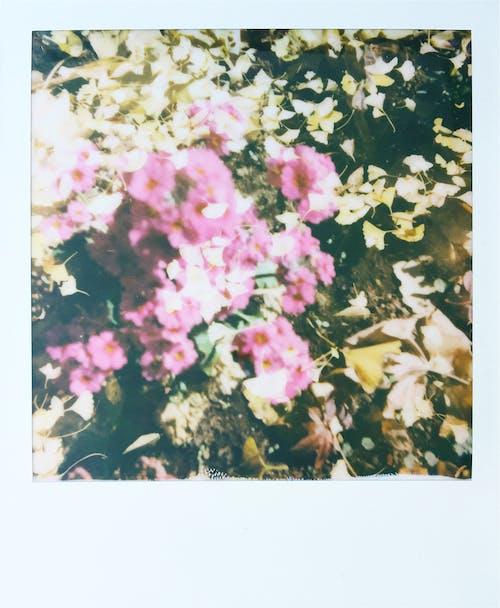 Gratis arkivbilde med årstid, blad, blomst