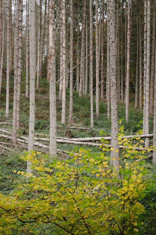 atmosfera de outono, 가을, 가을 기분의 무료 스톡 사진