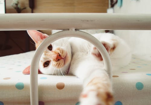 Free stock photo of bed, cat, cute, family