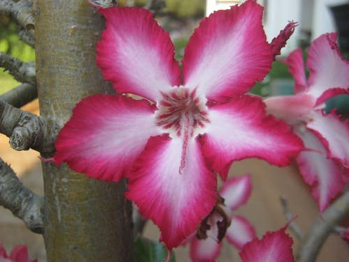 Free stock photo of beautiful flower, flower, plant