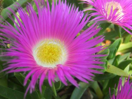 Free stock photo of beautiful flower, flora, flower