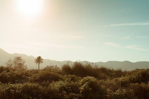 Free stock photo of beach, palm tree, palms, sand dunes