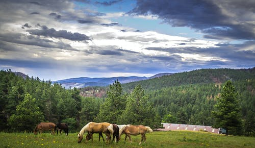 Ingyenes stockfotó hegyek, tájkép, természet témában
