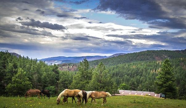 Free stock photo of landscape, mountains, nature, horses