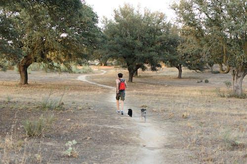 Free stock photo of Boadilla del monte, leisure, trees, way