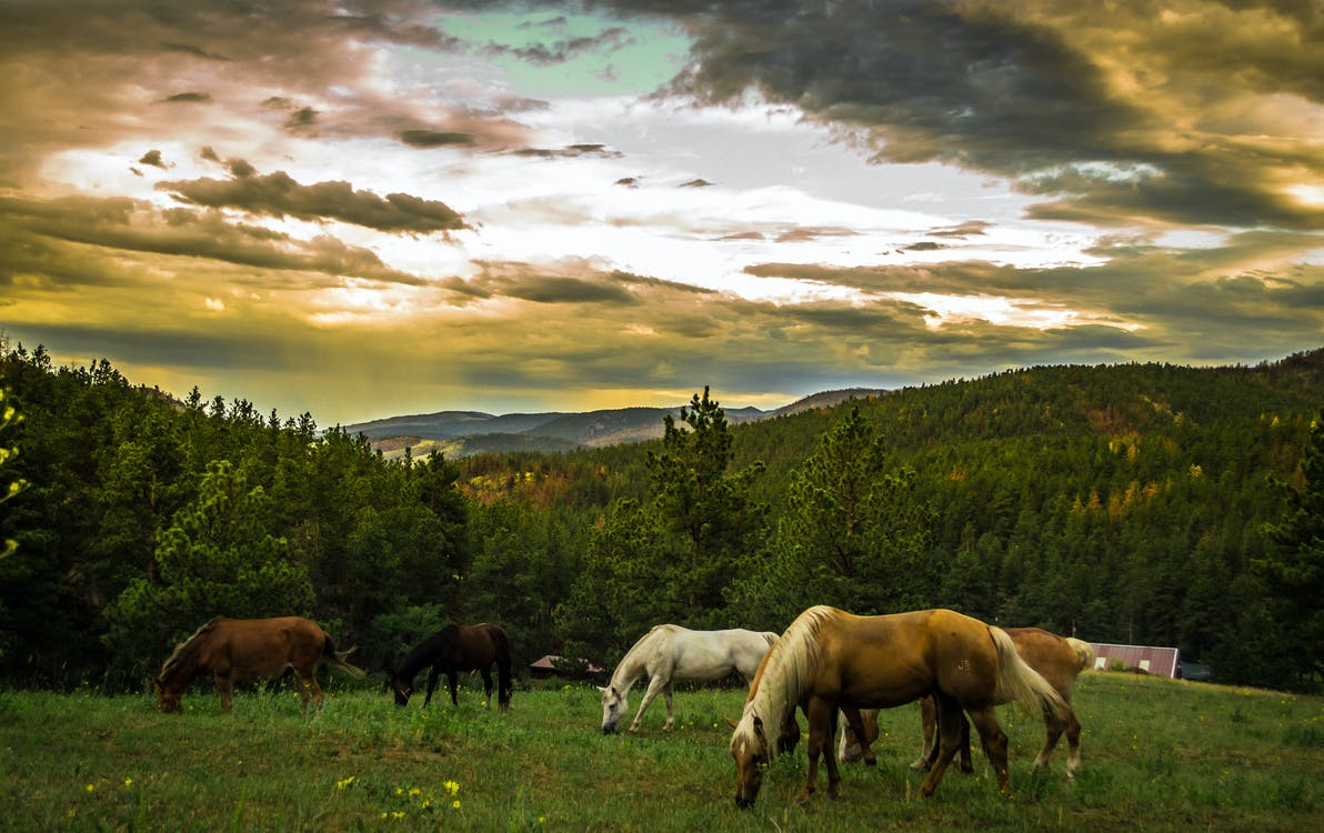 Black Brown and White Horses on Green Grass