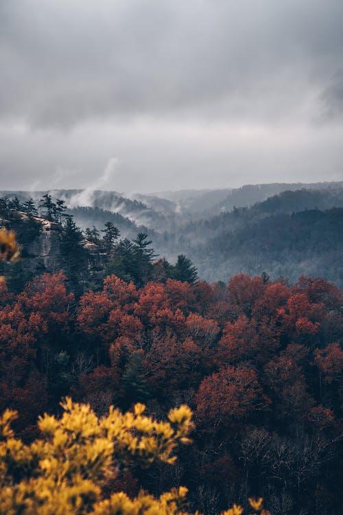 Brown Trees Near Mountain