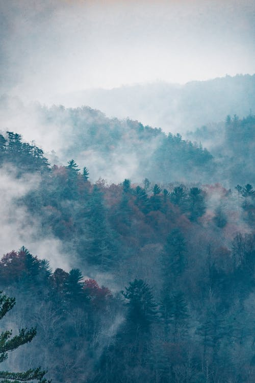 Green and Red Trees Covered With Fog