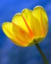 nature, yellow, flower