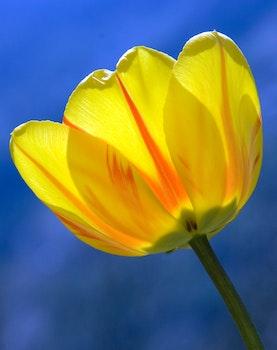 Yellow Adn Orange Petaled Print