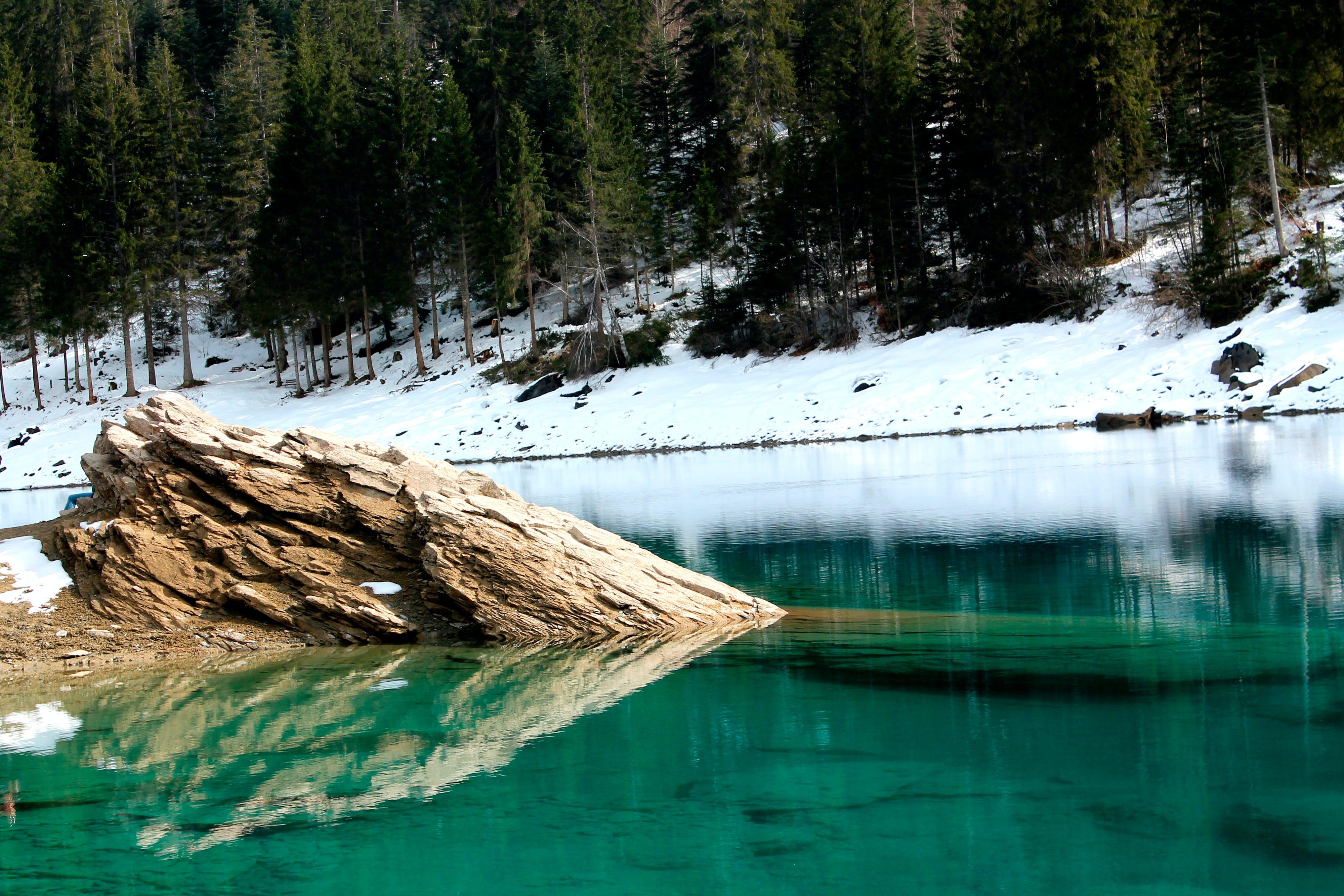 Brown Tree in Water