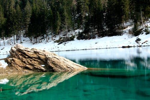 冬季, 冷, 冷冰的, 天性 的 免费素材照片