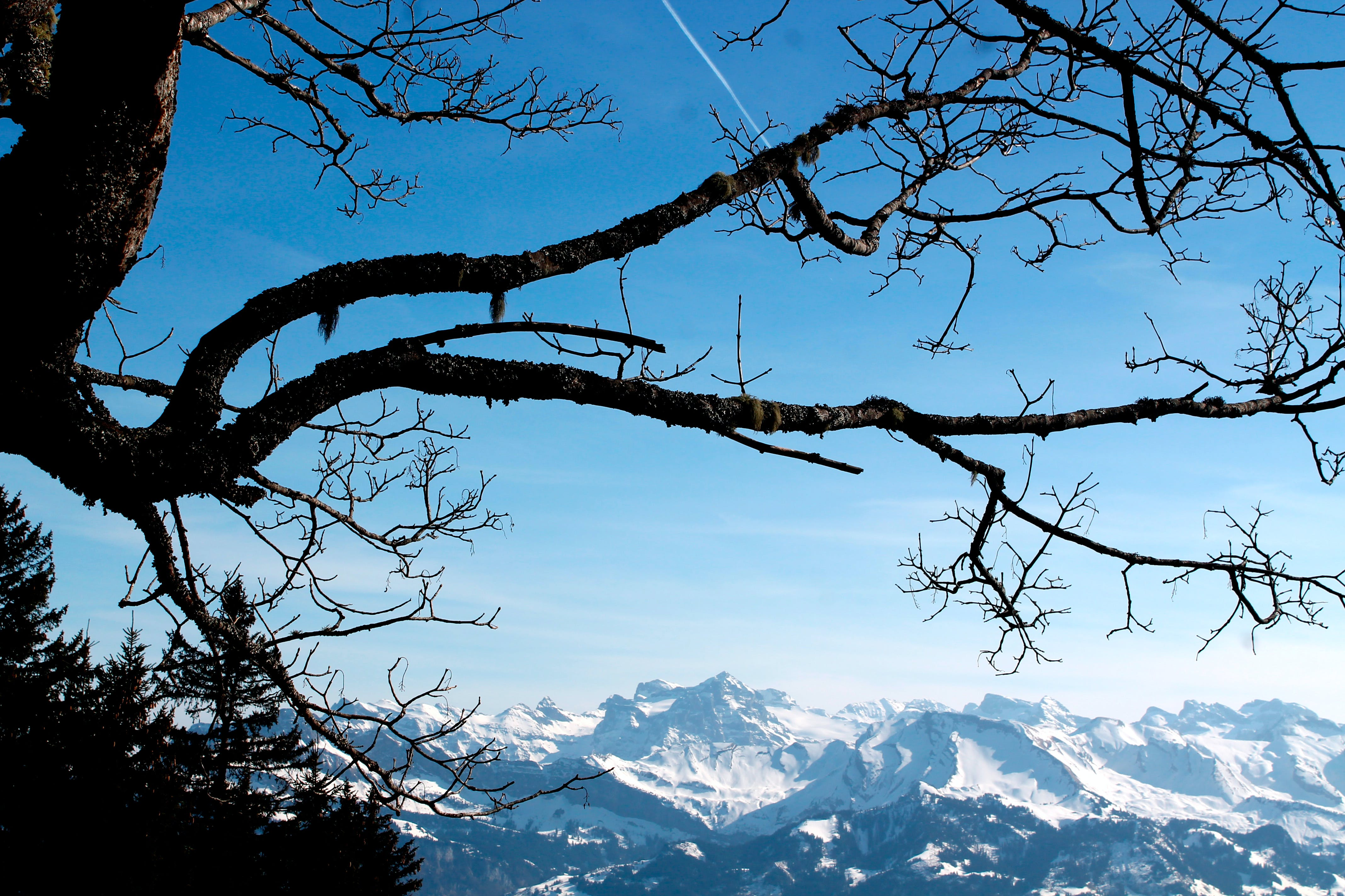 Free stock photo of blue sky, branches, mountain, snow capped mountains