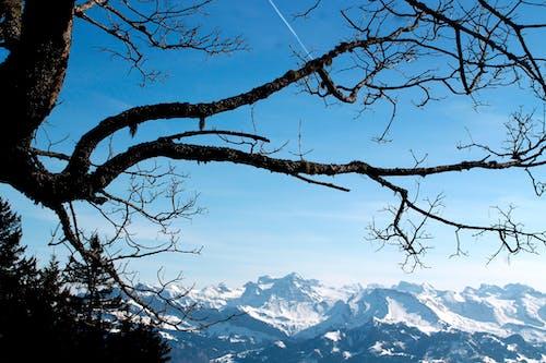 Ảnh lưu trữ miễn phí về chi nhánh, núi, núi phủ tuyết, trời xanh
