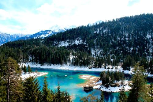Ảnh lưu trữ miễn phí về cây, Hồ bị đóng băng, mùa đông, rừng
