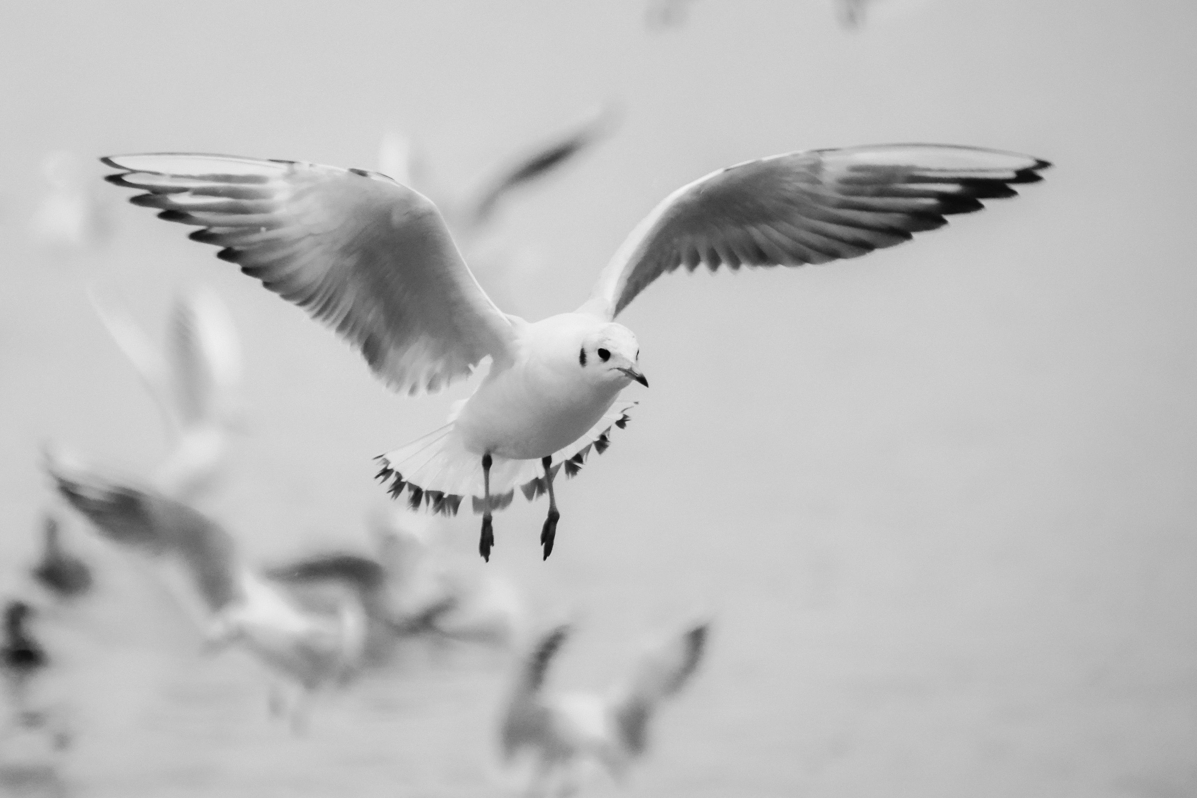 Grayscale Photo of Bird