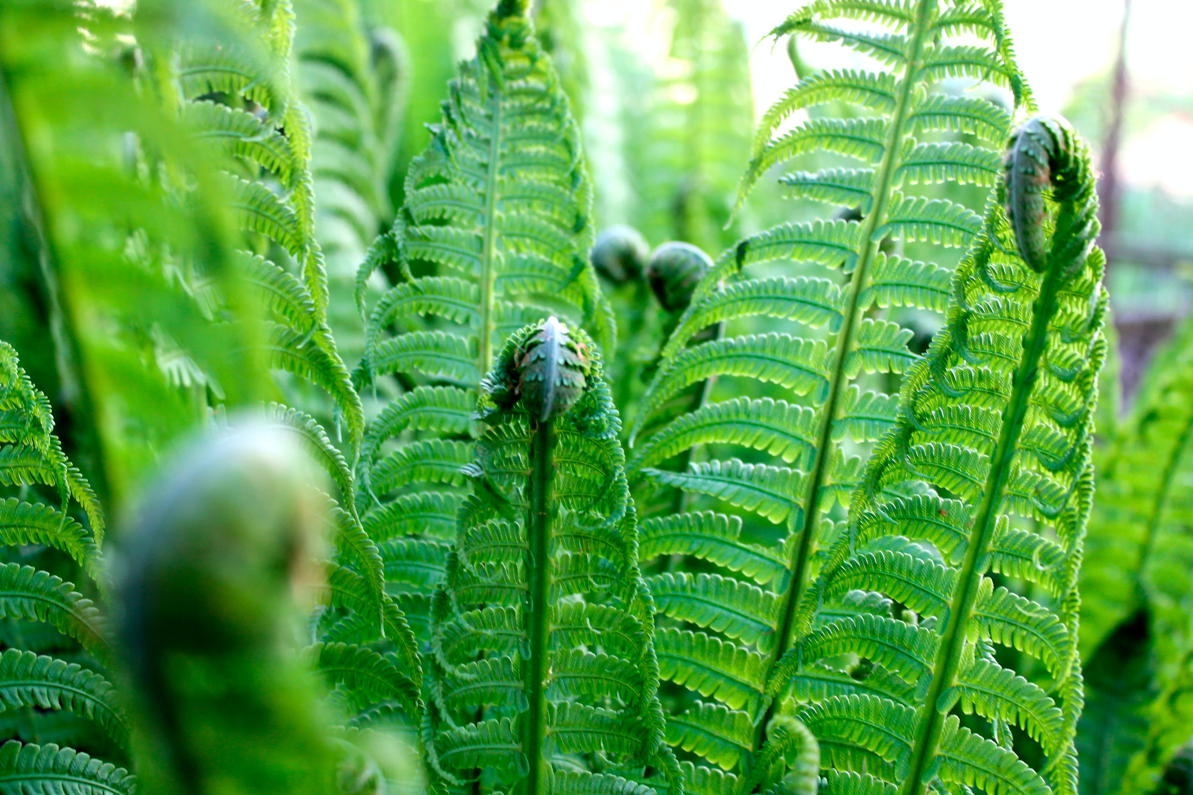 Free stock photo of fern, focus, new plant, plant