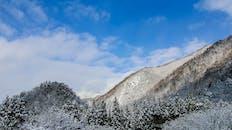 樹木覆蓋著雪