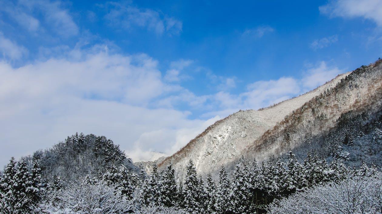 Деревья, покрытые снегом