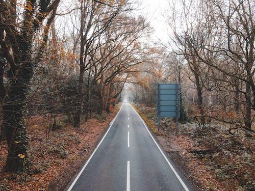 Narrow road through autumn forest on foggy day