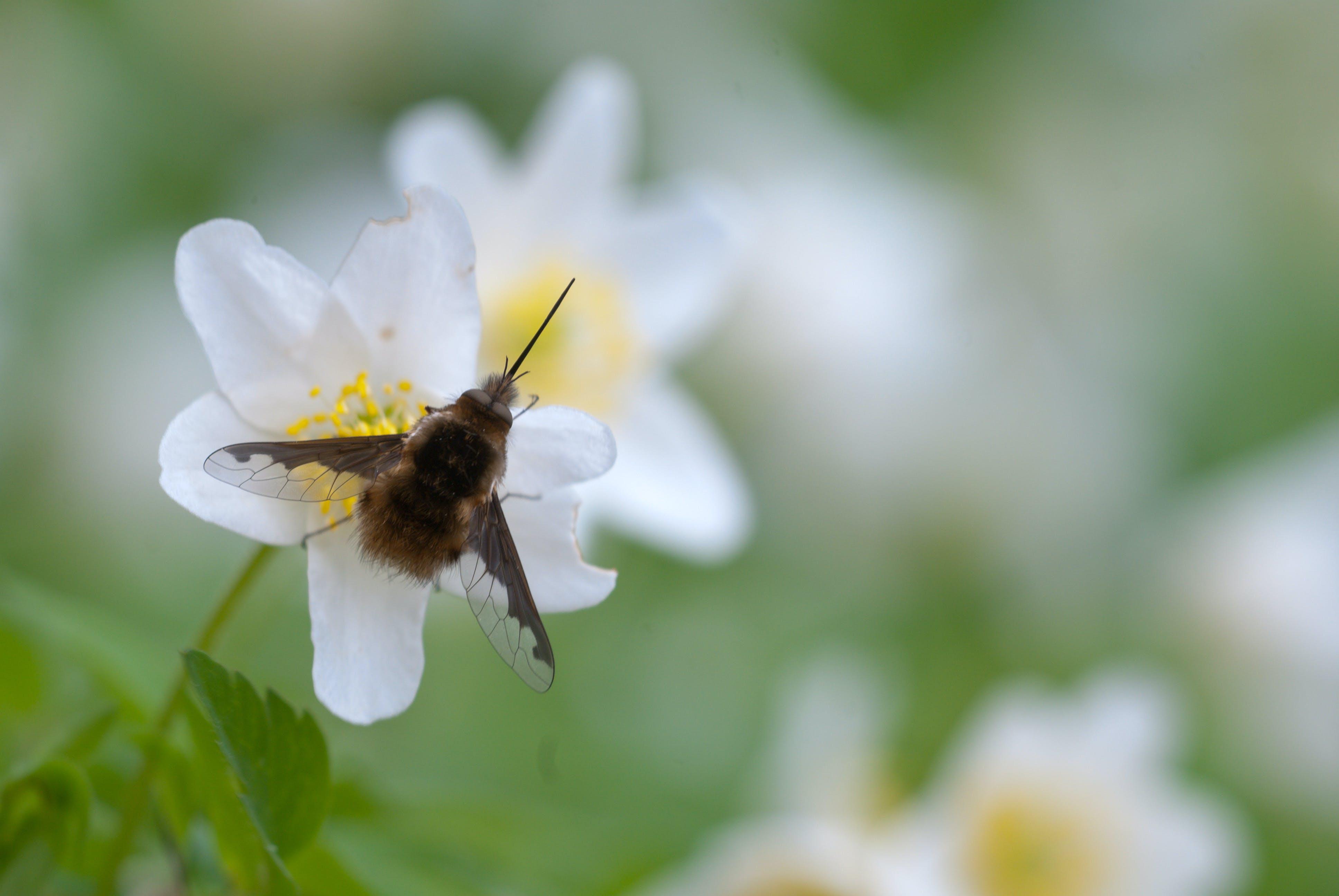 Brown Moth on White Petal Flower during Daytime