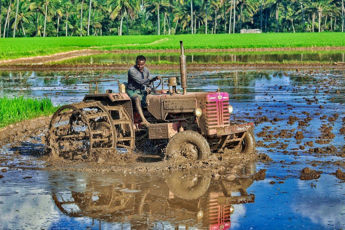คลังภาพถ่ายฟรี ของ กลางแจ้ง, การท่องเที่ยว, การเกษตร