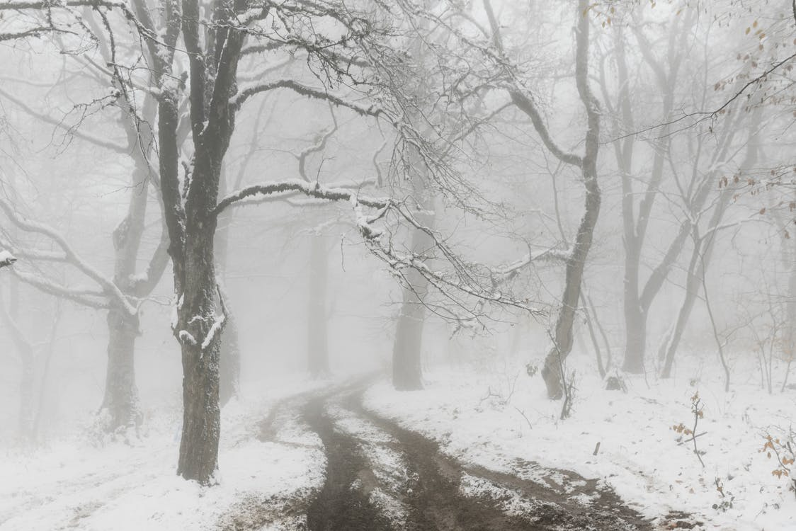 Empty narrow path covered with snow near trees in foggy snowy weather on winter day