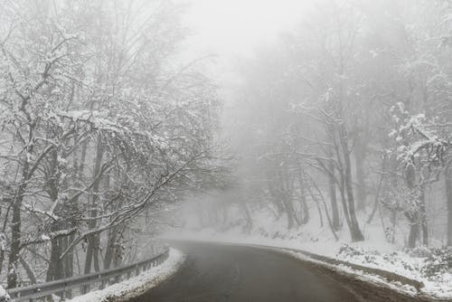 Empty asphalt road surrounded with leafless trees covered with snow in misty weather in winter