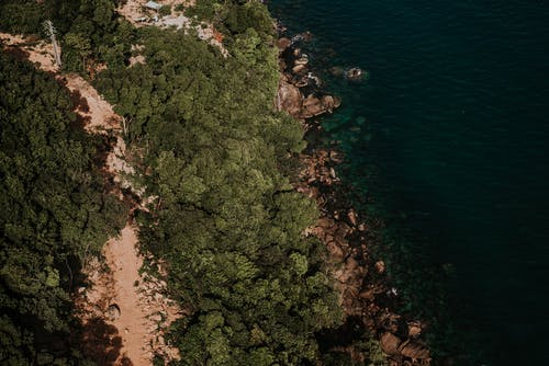 açık deniz, ada, ada hayatı, ağaç içeren Ücretsiz stok fotoğraf