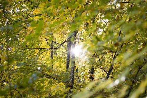 Free stock photo of autumn, background, beautiful, bokeh