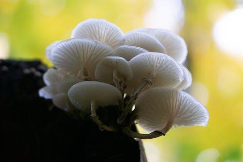 White Mushrooms in Tilt Shift Lens