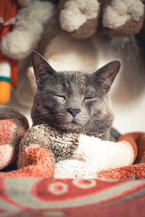 felino, 冬季, 加托 的 免费素材图片