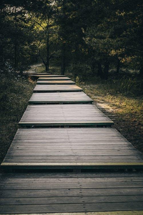 光, 光線, 公園, 原本 的 免費圖庫相片