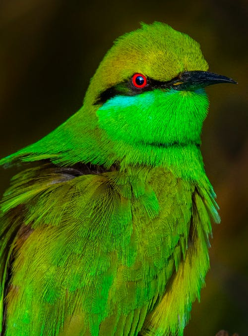 Green bee eater in nature